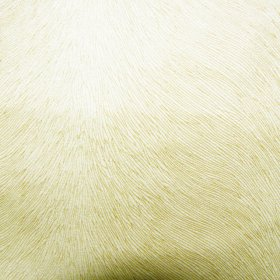 Ткань велюр Бибер ivori
