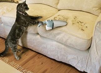 Уход за диваном