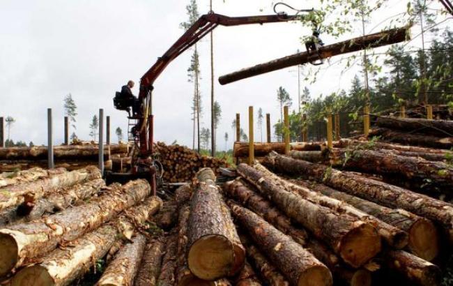Массовая вырубка лесов