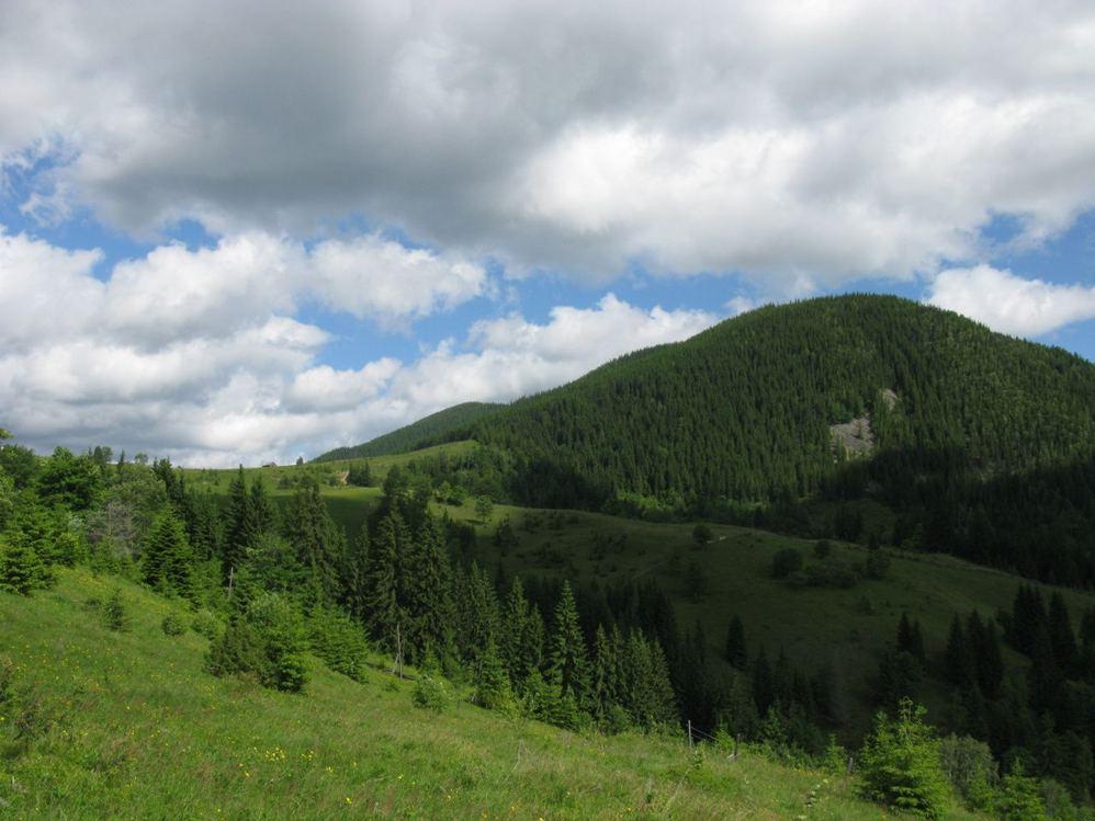 Ліси в Коломиї