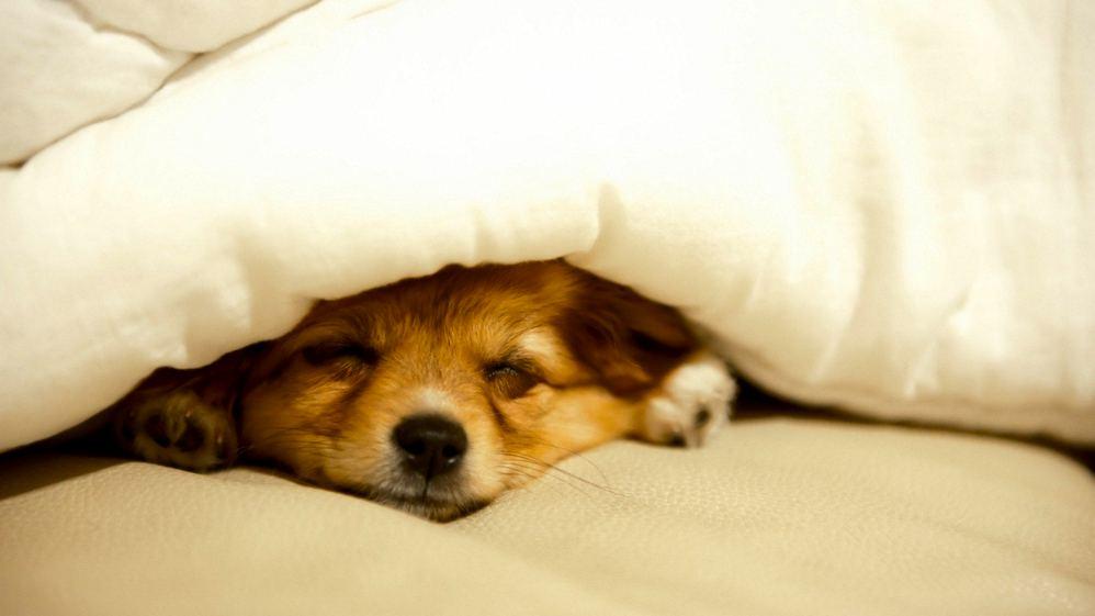 Одеялом на кровати